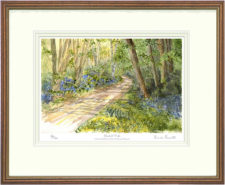Bluebell Walk - Framed Leaflet Pic