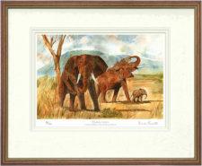 Elephant Antics - Framed Leaflet Pic