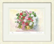Geraniums-in-Bloom