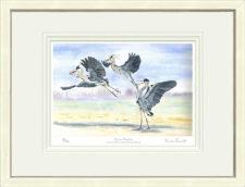 Herons Haggling - White Framed Leaflet Pic
